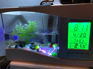 image, fishtank, clock, time, calendar, temperature