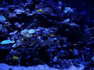 リヴォルノ水族館のカラフルな魚