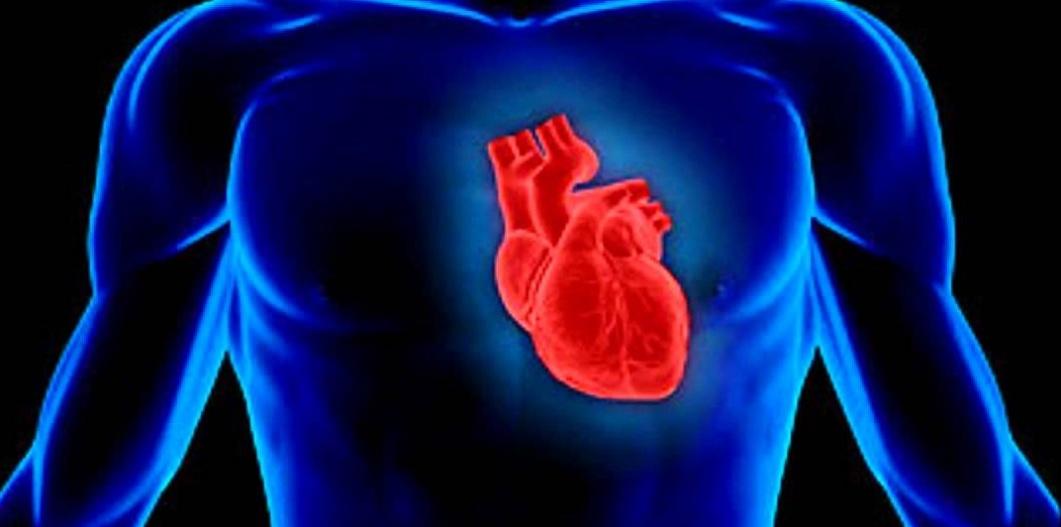 Fisiología (III): el sistema circulatorio - Biología
