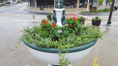 flowers added to the downtown areas from the weekend effort to beautify  Franklin by the Downtown Partnership and dozens of volunteers