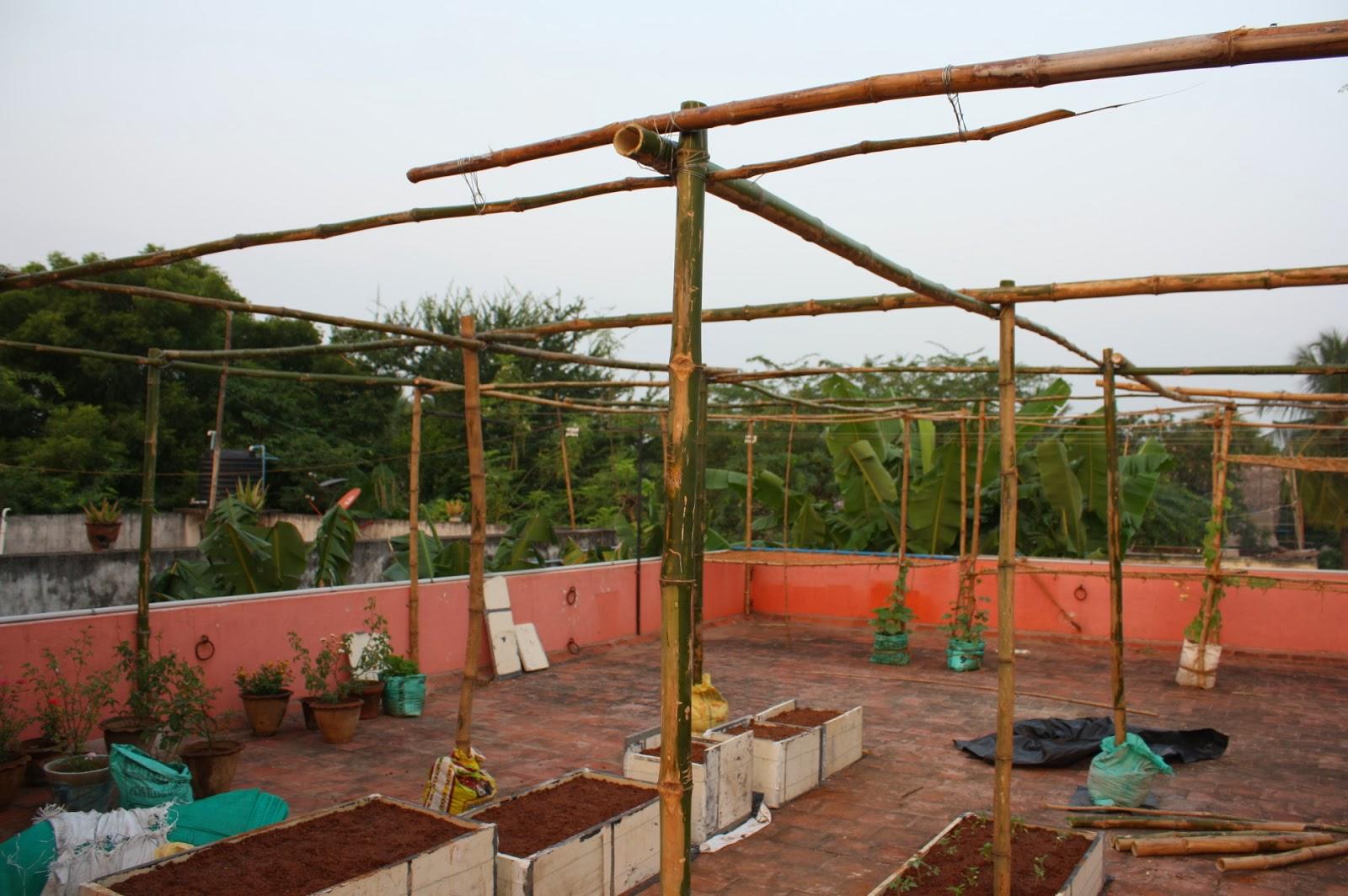 TERRACE GARDENING: My Green House