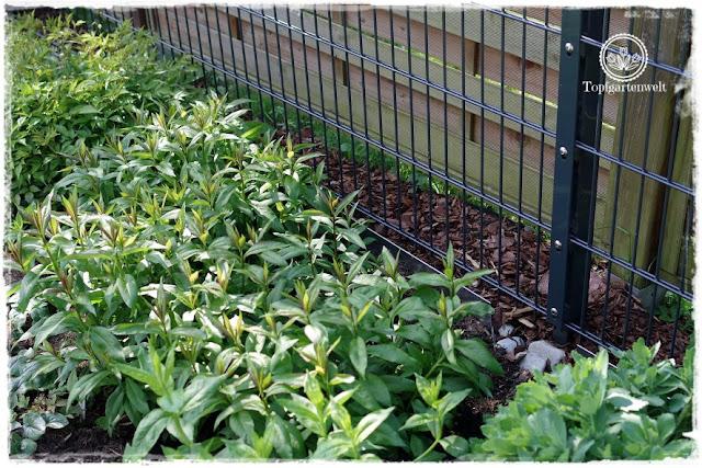 Gartenblog Topfgartenwelt Unkrautvlies im Test: das Unkrautvlies wird mit Hilfe von Rindenmulch versteckt