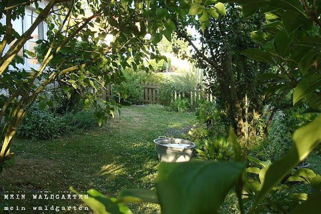 mein waldgarten: the day after . . ., Garten Ideen