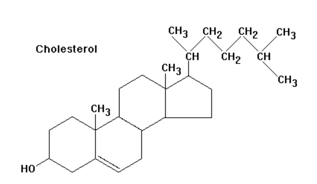 Fatty acid synthesis: MCQ of the day ~ BASIC MEDICAL SCIENCES