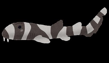イヌザメのイラスト