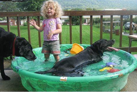 Tắm cho chó con đúng cách