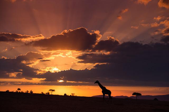 Atardecer en el Masái Mara, Kenia