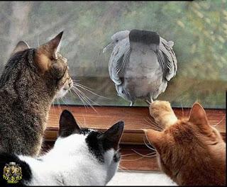 صور حيوانات مضحكة , صور مضحكة للحيوانات , اجمل صور حيوانات مضحكة