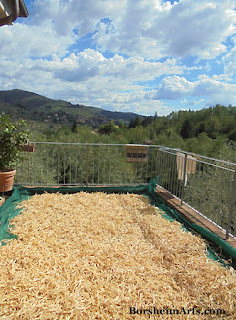 a perfect day, white beans drying in the sun in Tuscany