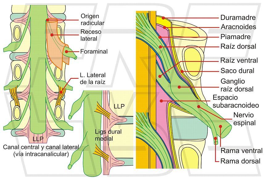 Fisioimágenes: Un recuerdo visual del nivel lumbar