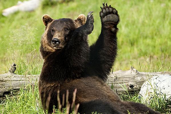 Jill Boyd S Place The Genuine Boyds Bear