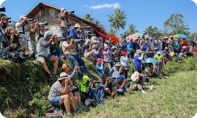Motret+Pacu+Jawi+Sumatera+Barat