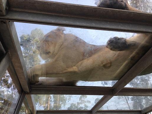 Porto - Zoo Santo Inacio