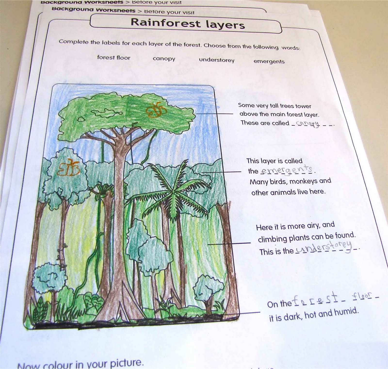 Worksheets Layers Of The Rainforest Worksheet
