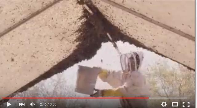 Μήπως παραγίναμε σύγχρονοι μελισσοκόμοι; VIDEO