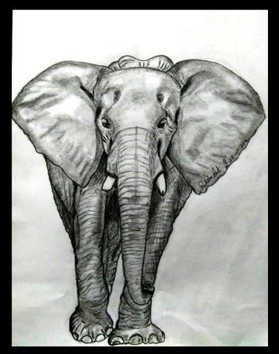 PENCIL DRAWING - Elephant