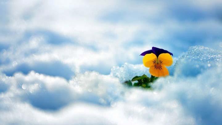 çiçekler ve kış resimleri