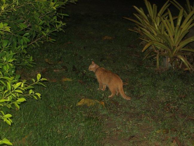Кот в темноте охотится