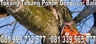 tukang tebang pohon Denpasar Bali