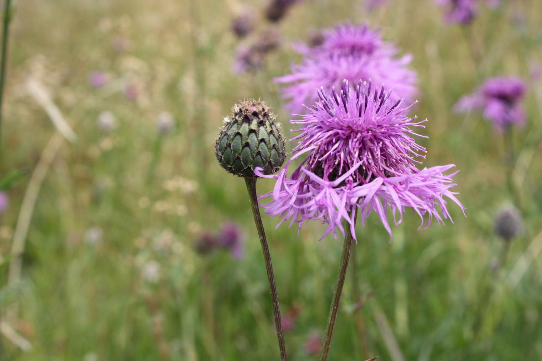 En blomma for mandela