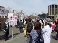 大阪造幣局 桜の通り抜け 南門 禁止事項