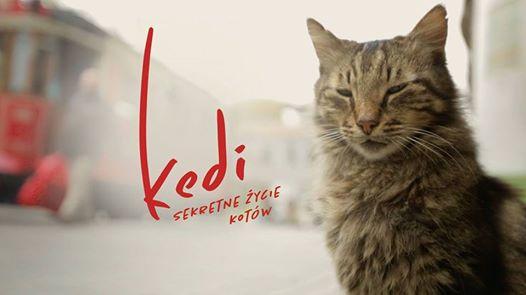Kot, czyli lekarstwo na wszystko – recenzja filmu <i>Kedi</i>
