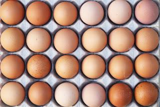 fipronil eggs