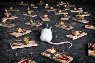 14 Tips Cara Mengusir Tikus, Pengusir Ampuh Alami