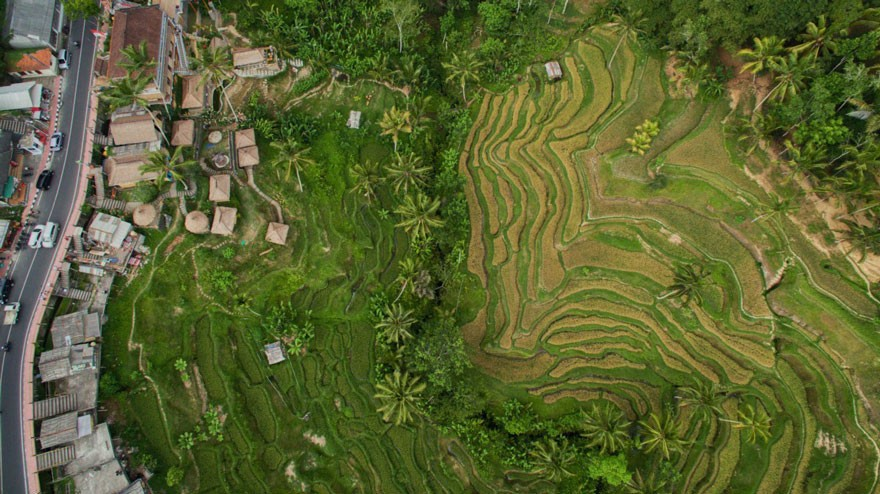 11. Tegallalang Rice Terraces, Bali  - 12 of The Most Stunning Images Captured By Drones In 2015