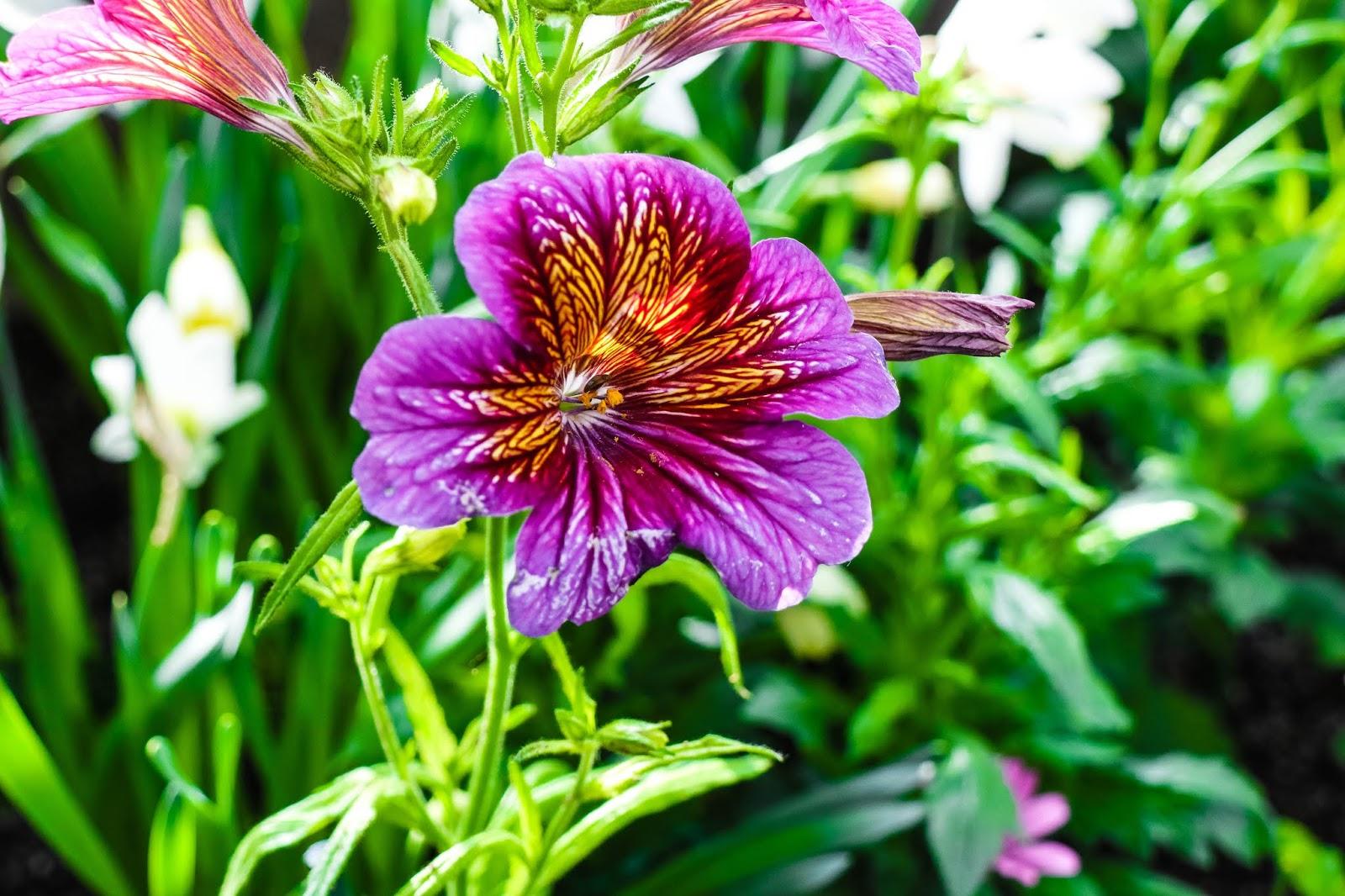 Allan Gardens Conservatory Toronto Park Flowers