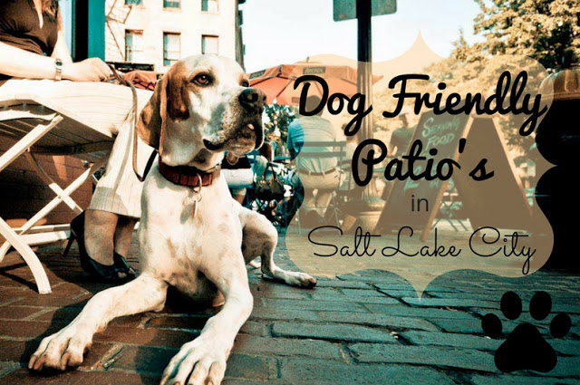 SLC's Best Dog-Friendly Restaurant Patios!