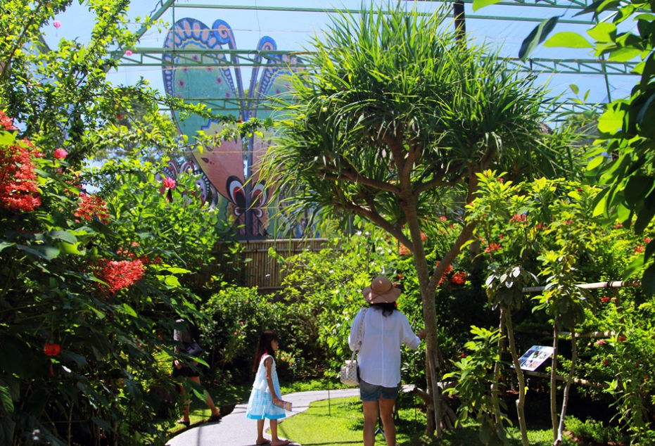 Taman Kupu Kupu Bali Bali Butterfly Park Informasi