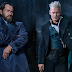 Fantastic Beasts Director Hints Dumbledore's Homosexuality Might Not Be Addressed
