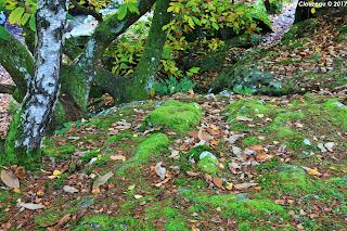 Restant du Long Rocher, Fontainebleau