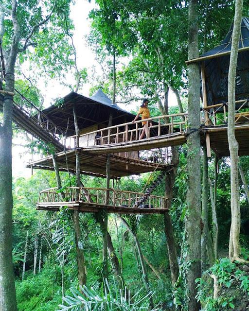Tempat Wisata Hits di Bali yaitu Rumah Pohon Temega Karangasem