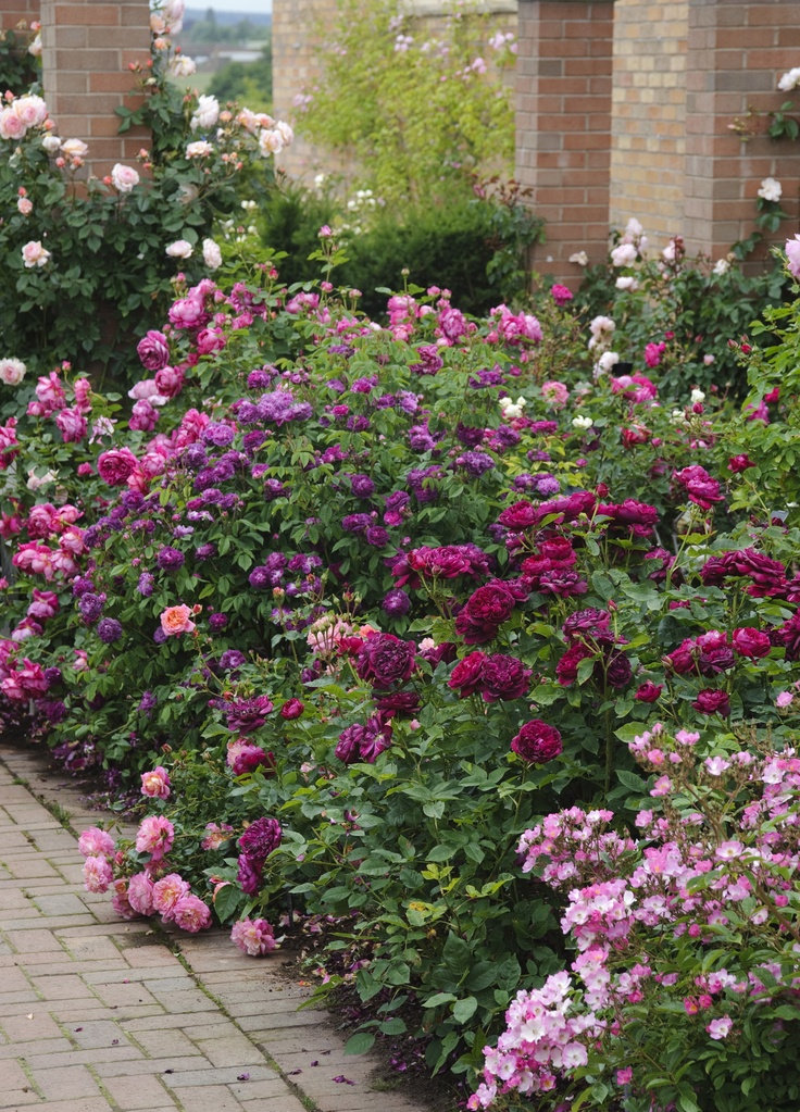 Cottage Gardens: Judy's Cottage Garden: The Best Perennial Plants For