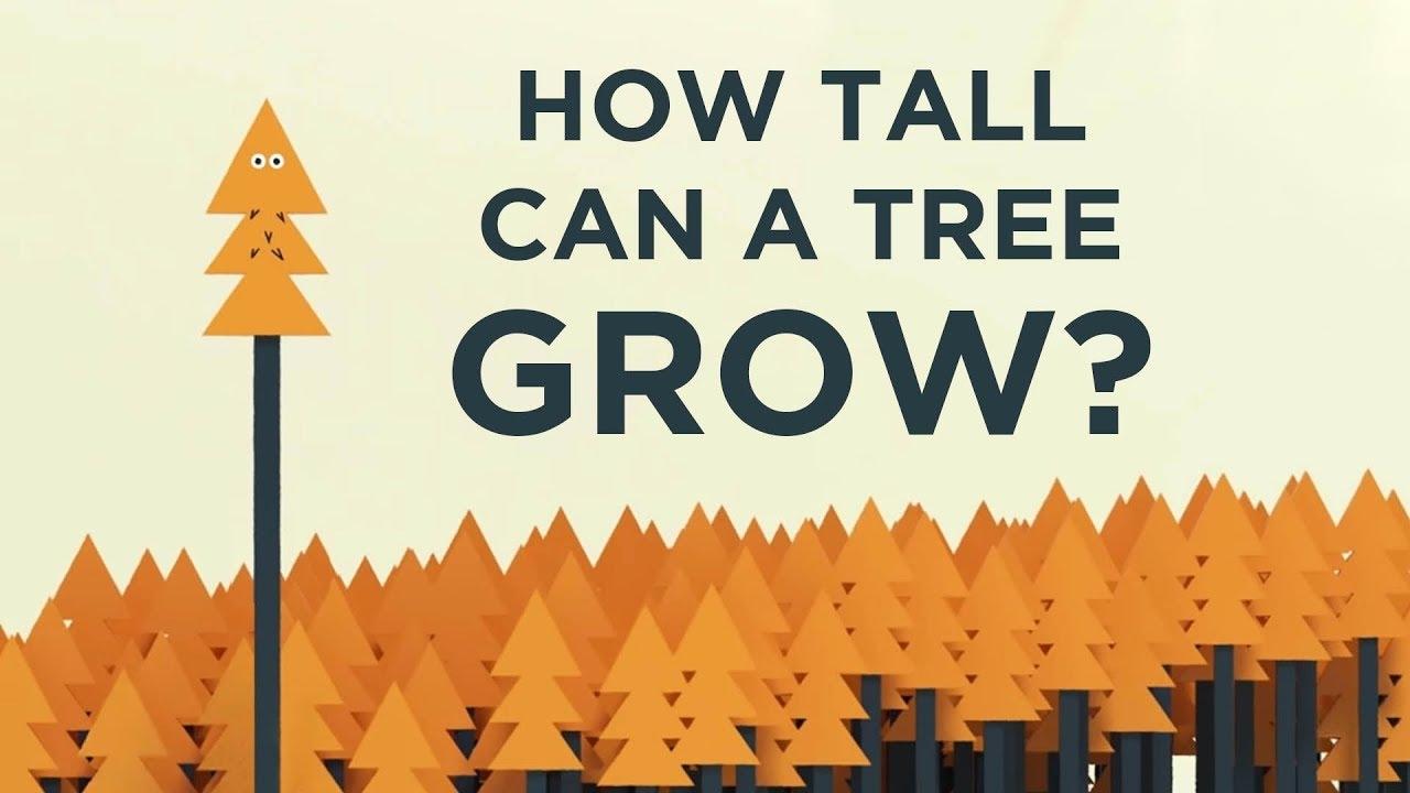 Wie hoch können Bäume wachsen und warum ist das limitiert? | Ein Video erklärt uns die Physik dahinter