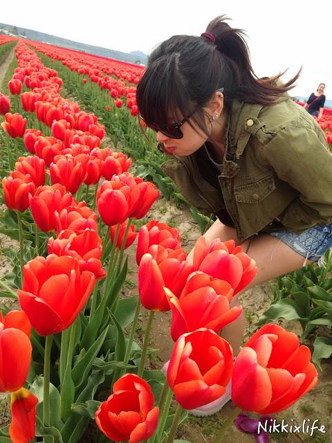 【西雅圖。生活】滿地整個校園的的櫻花樹及四月限定的鬱金香園 7