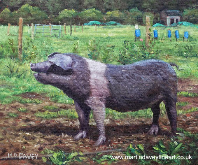 Black And White Pig on Farm-oil painting artist Martin davey