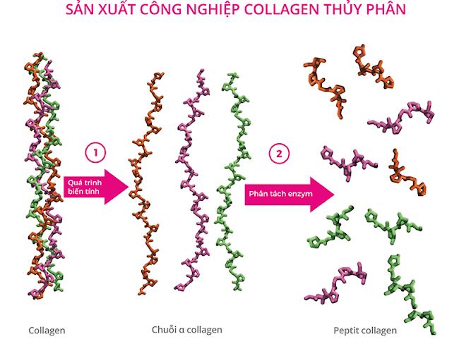 Làm thế nào để tăng sản xuất collagen cho phụ nữ lớn tuổi