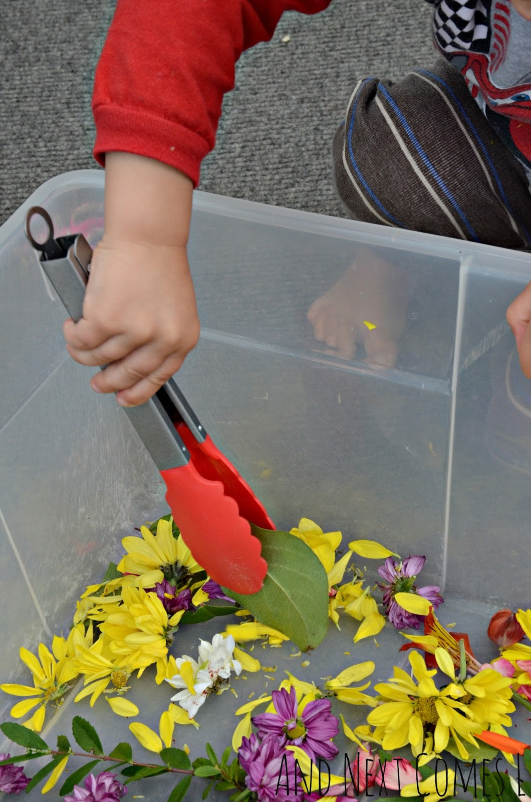 Practice fine motor skills with wilted flowers from And Next Comes L