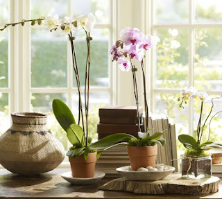 orchid growing accessories
