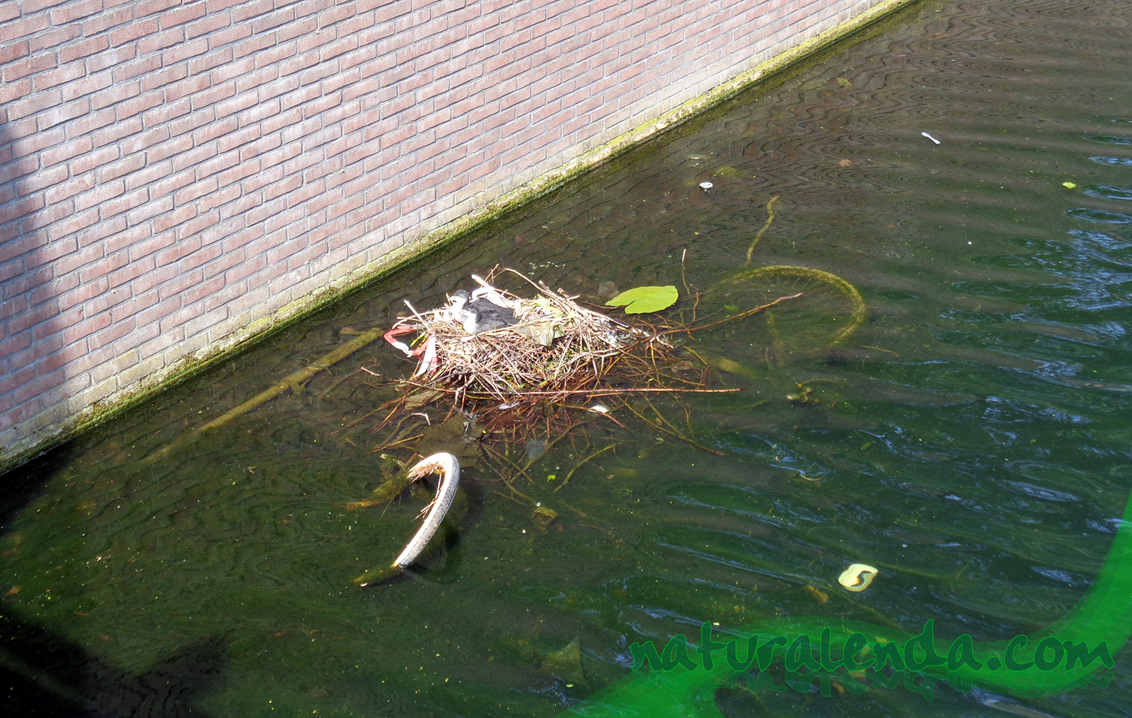 bici nido de patos
