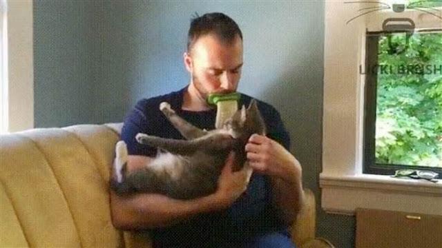 Penemuan Goblok! Alat Penjilat Kucing