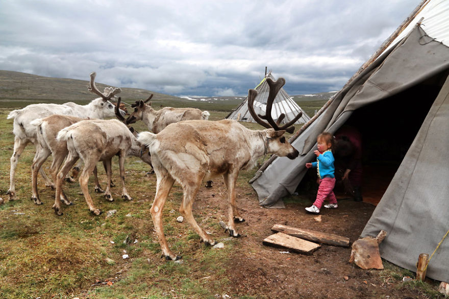 Tuvshinbayar is playing with the reindeer - Meet The Tsaatan Nomads In Mongolia Who Live Like No One Else