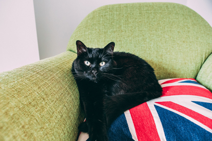 black cat on chair with union jack cushion