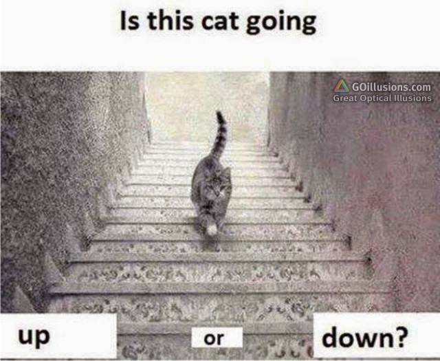 optical illusions brain teasers illusion puzzles cat down funny