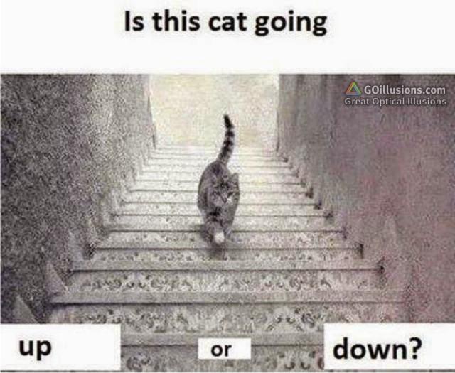 optical illusions find cat # 64