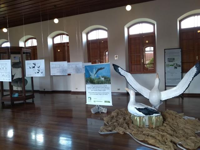 Museu da pesca - Santos - SP