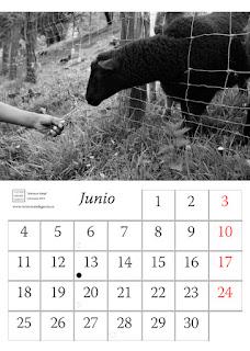 fotografia,oveja,calendario,valla,diseño,2018